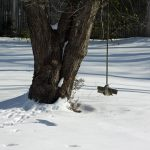 Photo of wood tree swing in winter