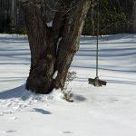 Photo of wood tree swing in winter